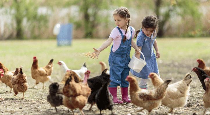 niña-jugando-en-la-granja
